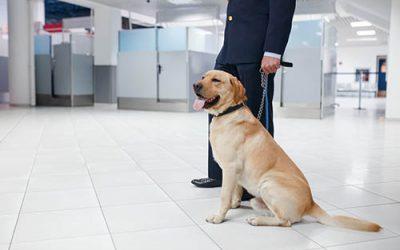 Inspection canine dans les immeubles fédéraux.